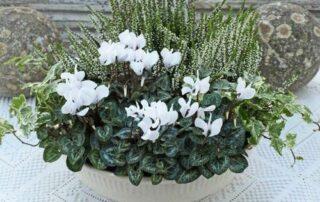 Winterliche Blumen 18